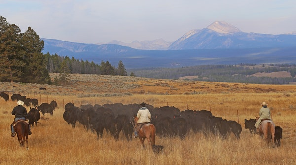 Rancher Clay Peterson, center, of Wisdom, Mont., enlists the help of several Minnesotans to find hundreds of cattle among 13,000 Montana mountain acre
