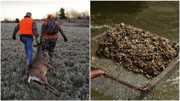 Minnesota's deer hunting tradition is threatened by shrinking numbers of hunters and faltering license sales, and disease is also playing a role. Zebr
