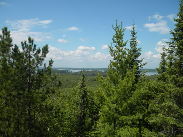 An aspen and pine forest off a hiking trail in Lake Vermilion State Park.
