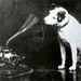 Francis Barraud's 1895 painting of Nipper looking into an Edison Bell cylinder phonograph. Edison declined an offer to use it in advertising.