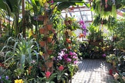 Beat the winter blues by visiting the Meyer-Deats Conservatory at the Minnesota Landscape Arboretum.