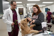 Rachellee Sigler, a certified vet tech, fed Gary, a 4-year-old goldendoodle, before she and fourth-year vet student Andrew Kaplan did an examination a