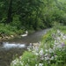Beaver Creek Valley State Park's namesake stream flowed clear Tuesday before a violent thunderstorm struck the area.