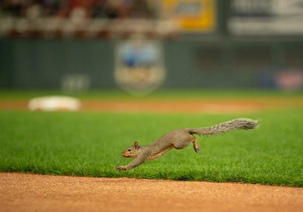 Listen: Squirrel mania! (And in praise of Nelson Cruz)
