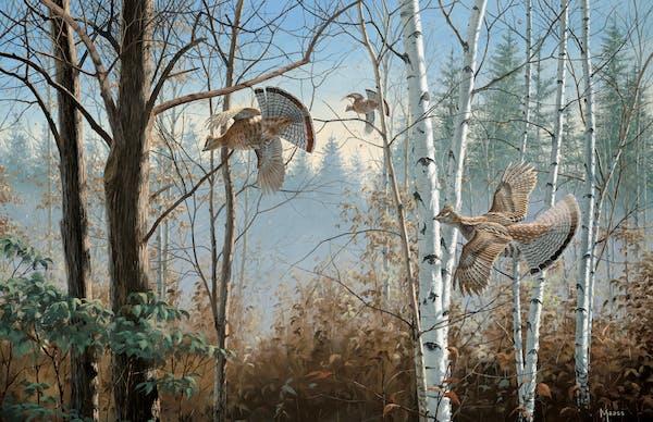"Birds are plentiful in ""Three Birds Up — Ruffed Grouse,"" painted by Minnesota wildlife artist David A. Maass."