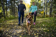 Chris Aepelbacher and Mary Krull walked along a trail in Duluth's Lester Park with Krull's dog, Laila. The engaged couple both bought homes to liv