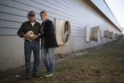 Kerry and Barb Mergen outside their now empty chicken house with a straggler who managed to elude the crew that came in on April 9 to euthanize the ot