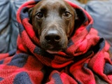 The CDC says there have been few documented U.S. cases of pets being infected with the novel coronavirus.
