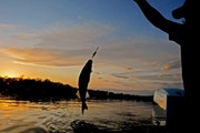 Mille Lacs walleye