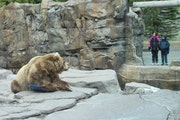 Outdoor exhibits at the Lake Superior Zoo will reopen Friday.