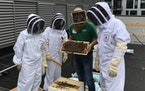 Professional beekeeper Ben Grout, center, with Kraus-Anderson employees Tonya Kostick, Amber Emly and Mike Smoczyk.