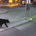 Union Depot photo: A bear was spotted at St. Paul's Union Depot on Thursday.