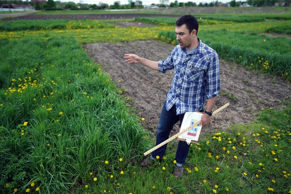 University of Minnesota research Prof. Jacob Jungers checks the growth of Kernza grass at a field at the U's St. Paul campus in May 2019.