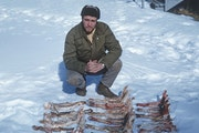 Dave Mech in 1960 displayed 19 of the many moose jawbones he collected around Isle Royale to help determine age and health of the animals at the time