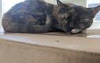 Kitty on a box