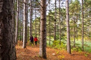 People hike on land that is part of the Minnesota Heritage Forest, thousands of acres recently purchased by the Conservation Fund.