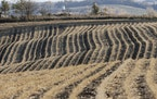 A harvested field in Winslow, Neb. Soybean prices rose to a four-year high this fall.