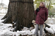 A tree for the centuries Kyla Wahlstrom led the fight to save the giant elm tree she has long admired while on walks in her Minneapolis neighborhood b