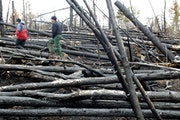 High winds are one of the top natural hazards in Minnesota. A massive straight line wind leveled thousands of acres of trees in the BWCA July 4th of 1