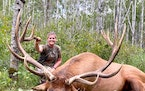 Lacey Lupien, 33, of Lancaster, Minn., with the giant elk she shot 3 miles from her home in Kittson County. She harvested the bull in August, and it w