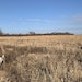Loral I Delaney approached an unseen pheasant that her German shorthair, Reagan, and English setter, Clooney, have scented and pointed during a recent