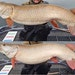 Benjamin Knutson of Inver Grove Heights had spent years trying to catch a giant muskie. Fishing Mille Lacs on Nov. 25, he finally landed his first, a