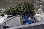 Hugo Boxer, 7, held the family Christmas tree on the roof of the car at Hansen Tree Farm on Sunday, Dec. 4, 2016, in Ramsey, Minn. The family picked o