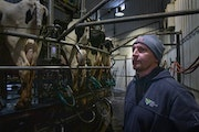 Ben Daley, in a file photo in the milking barn at the family farm near Lewiston.