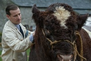 "Nicholas Ralph (with a two-ton bull) as country veterinarian James Herriot in ""All Creatures Great and Small."" PBS"