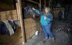 Horse breeder Candi Lemarr talked about life at her family farm in Sleepy Eye, Minn.