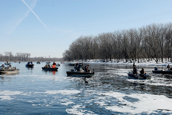 Hundreds of anglers ply the Mississippi River near Red Wing in spring to seek walleyes amd saiger that swim upstream from Lake Pepin to spawn.