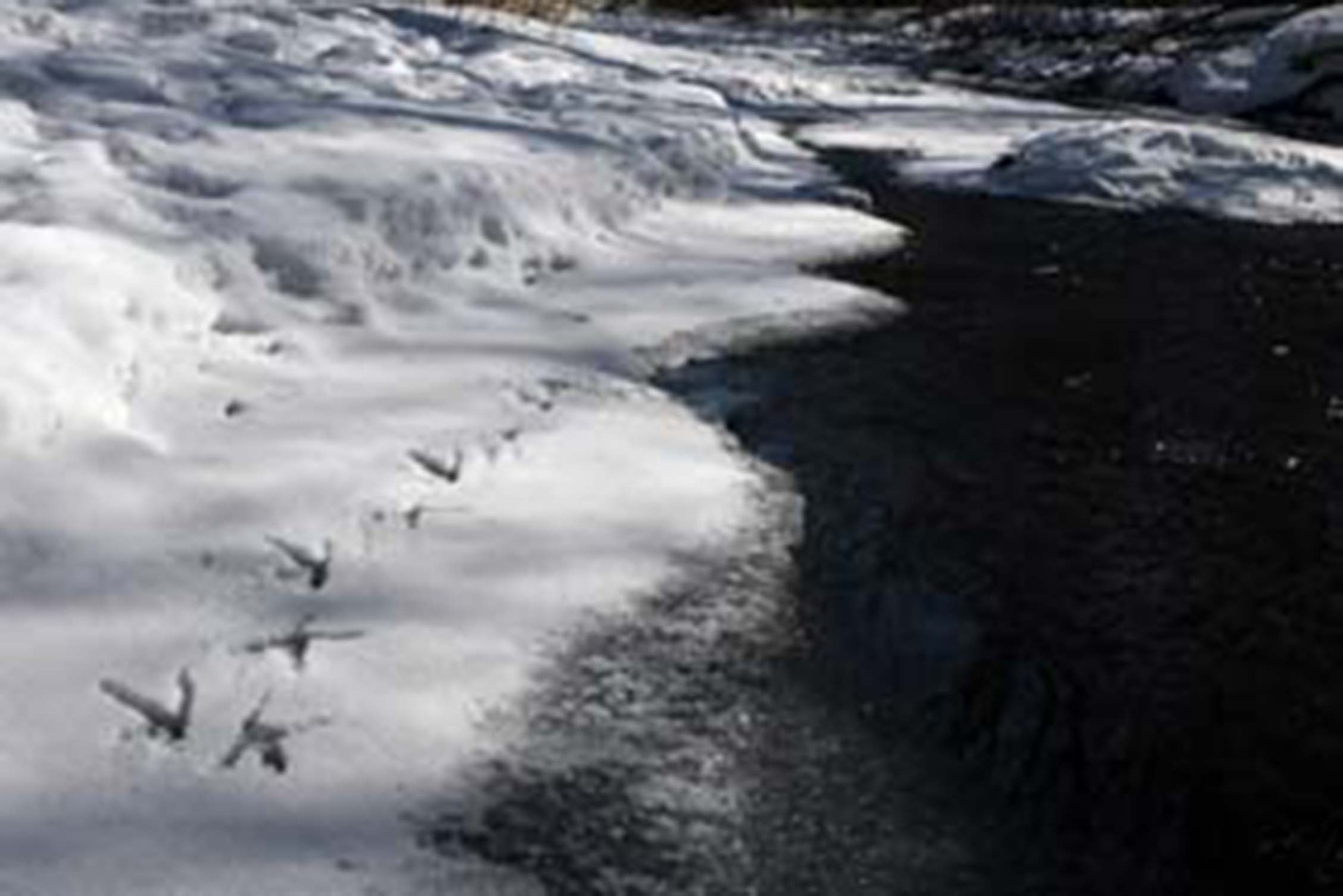 Slaght and fellow researchers would follow owl tracks down frozen rivers.