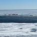 Stranded ice anglers await rescue off of Duluth's Lake Superior shoreline on Tuesday. Photo courtesy Darren Tilbury