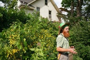 Andy Lapham in the community garden he tends on a formerly vacant lot in Minneapolis. He later bought the house next door, extended the garden and add