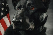 Anoka police said a K-9 named Bravo was shot Sunday, Feb 21, 2021. Bravo and his handler had been asked to help during pursuit of a carjacking suspect