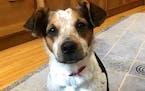 Margie Goldsmith's foster dog, Lisa Margie Goldsmith