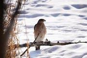 Embrace Winter challenge: Go bird-watching or stargazing