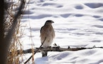 Embrace Winter challenge: Go bird-watching or stargazing