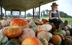 Sarah Frey, owner of Frey Farms, sits atop a mound of her pumpkins at her farm in Poseyville, Ind.