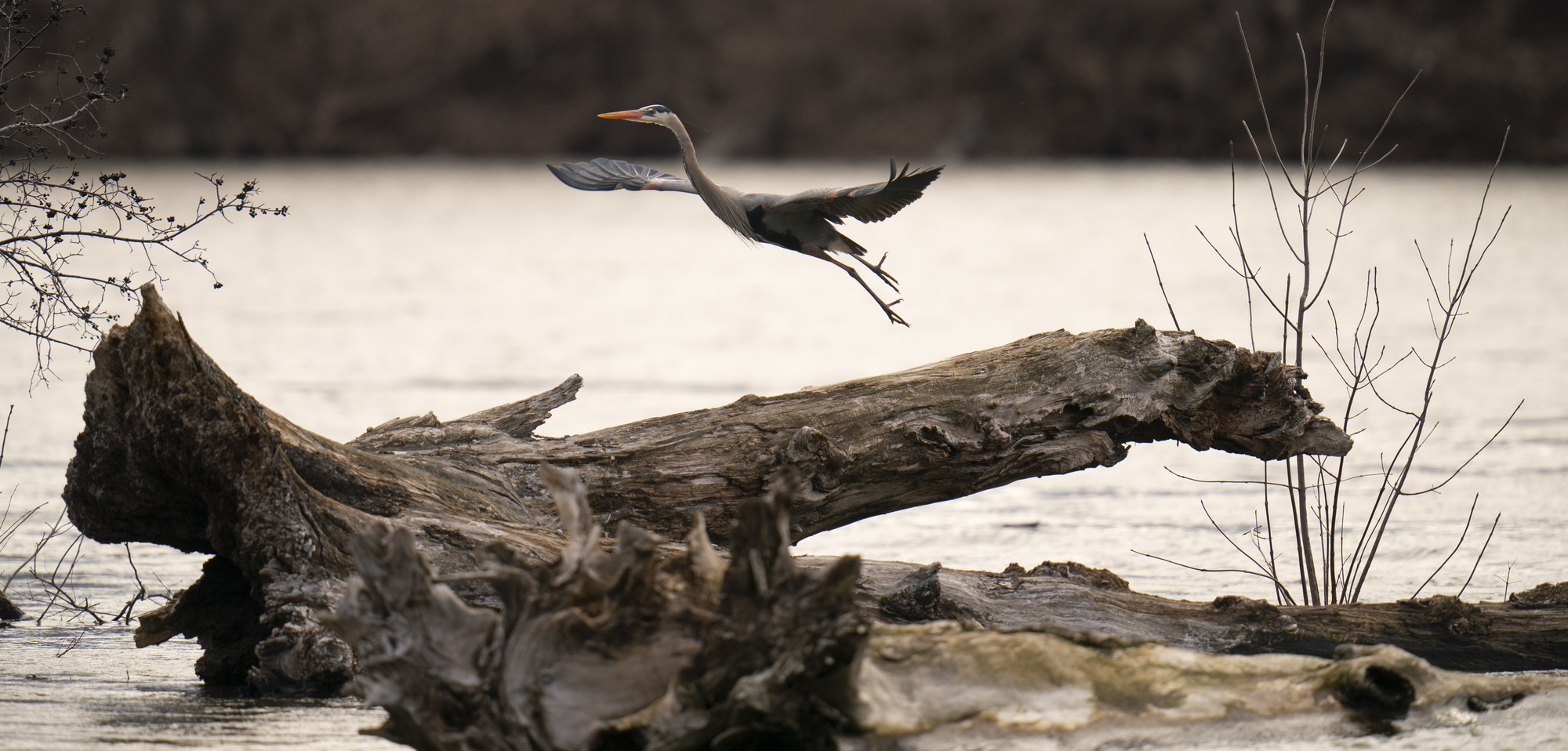 The great blue heron rookery along the Mississippi River in Minneapolis was a favorite spot for a budding birder.