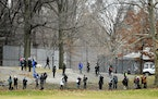 Birders flanked baseball fields in New York's Central Park in January, hoping for a glimpse of a snowy owl.