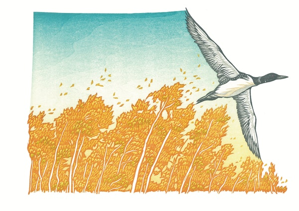"""A woodcut illustration by Nick Wroblewski within """"Hush Hush, Forest,"""" by Mary Casanova."""
