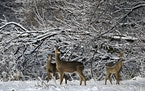 The Minnesota Department of Agriculture found lead in a little more than 7% of venison donated in the last decade to food pantries and shelters across
