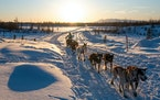 """Jessica Dixon, 17, neared the finish of the Junior Iditarod in Big Lake, Alaska. """"Nothing in the entire world can beat being out alone with your dog"""