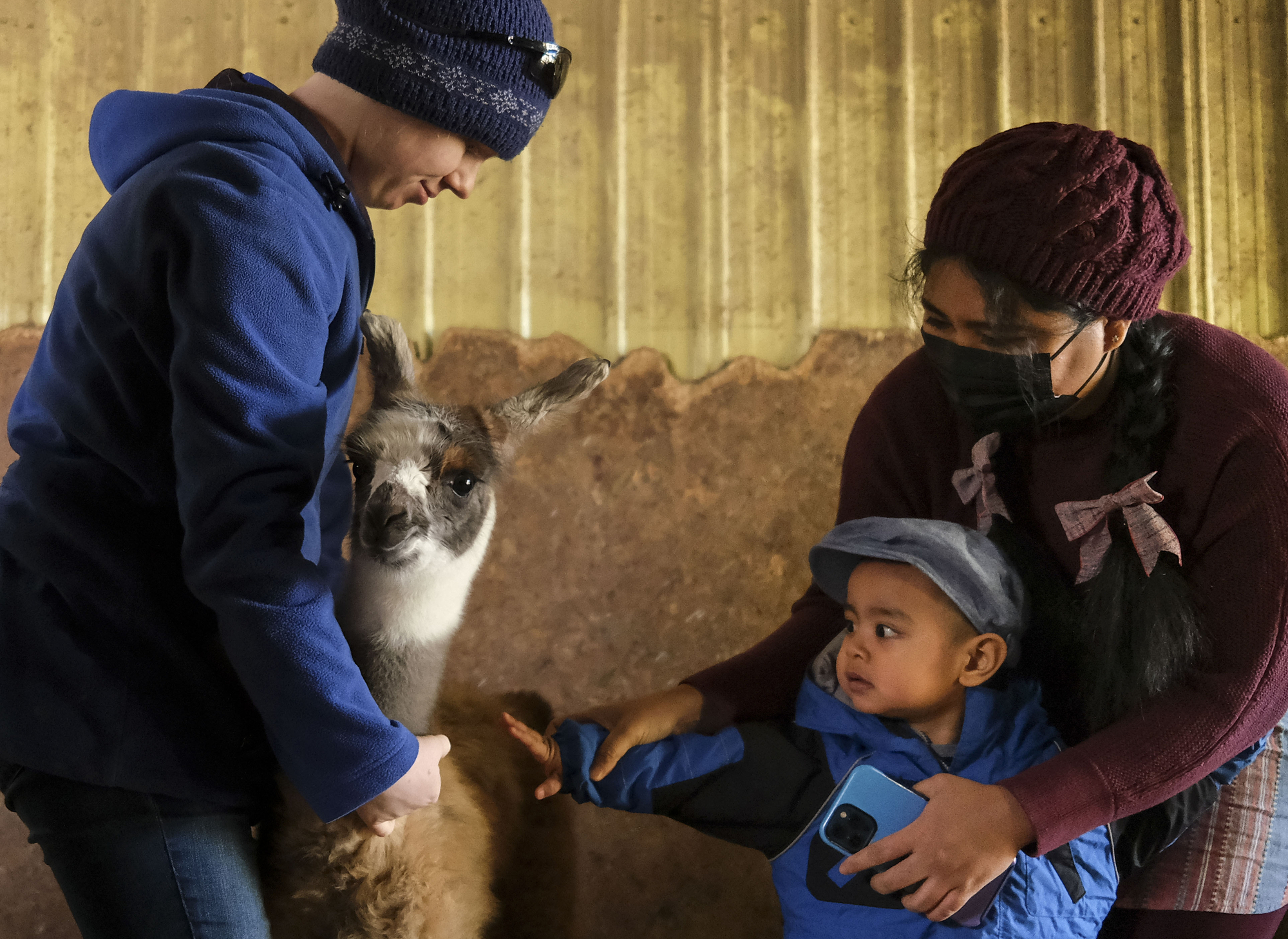 Phyo Wai, of Elk River, held her 2-year old son, Andrew Maung, as he patted a one-day old cria, or baby llama, which was being held by Margaret Thom.