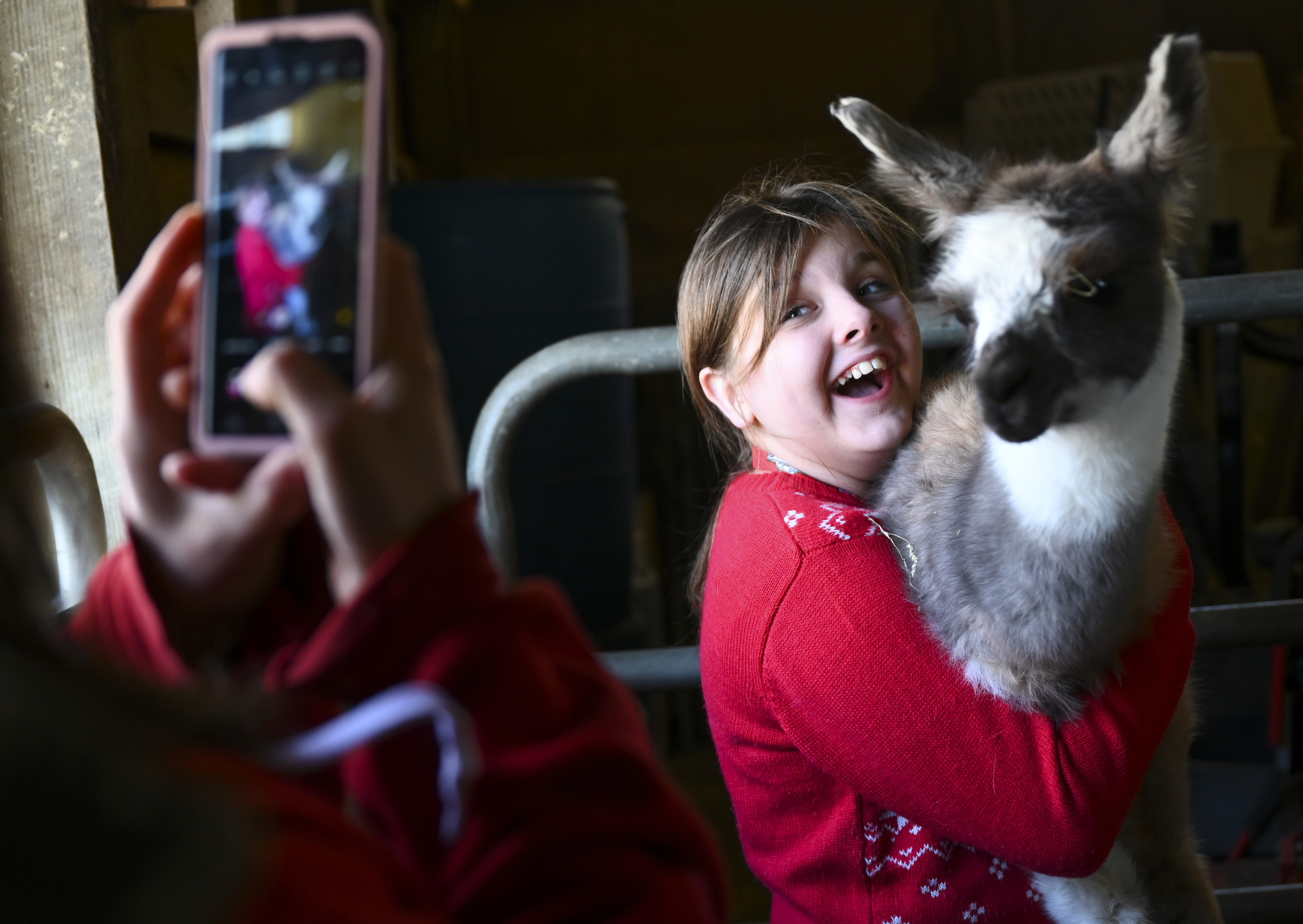 Mary Hugger took a photo of her daughter, Grace, 12, as she held a cria, a baby llama, while visiting Carlson's Llovable Llamas.