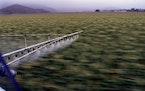 This file photo shows cropdusting a field of corn in Camarillo, Calif., in a 2001 file image. (Carlos Chavez/Los Angeles Times/TNS)
