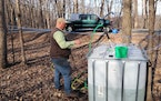 John Weyrauch pumped maple sap from a vat to a similar vat in the back of his pickup. Weyrauch's vacuum tube system has made collecting sap easier a