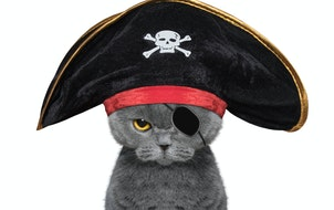 Some cats take well to the high seas.