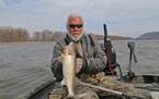 River guide Dick Grzywinski has found Mississippi River walleye and sauger fishing excellent in this early spring as the fish move up to the Red Wing